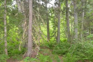 Photo 23: DL 1335A 37 Highway: Kitwanga Land for sale (Smithers And Area (Zone 54))  : MLS®# R2471833