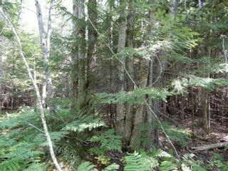 Photo 4: Lot West River Drive in Durham: 108-Rural Pictou County Vacant Land for sale (Northern Region)  : MLS®# 202122246