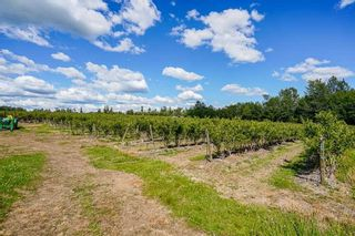 Photo 19: 21.44AC 240 STREET in Langley: Langley City Agri-Business for sale : MLS®# C8038637
