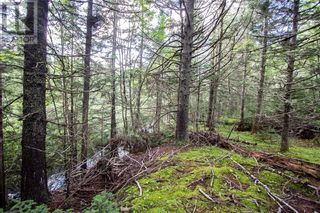 Photo 5: Lots Brooklyn RD in Midgic: Vacant Land for sale : MLS®# M136510