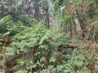 Photo 17: Lot 1 DL 3043: Keats Island Land for sale (Sunshine Coast)  : MLS®# R2554223