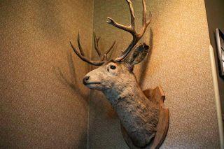Photo 44: 576 Poplar Bay: Rural Wetaskiwin County House for sale : MLS®# E4241359