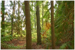 Photo 18: Lot 49 Forest Drive: Blind Bay Vacant Land for sale (Shuswap Lake)  : MLS®# 10217653