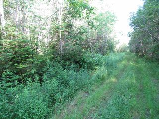 Photo 4: 236 Highway Highway in Kennetcook: 105-East Hants/Colchester West Vacant Land for sale (Halifax-Dartmouth)  : MLS®# 202116831