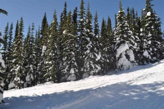 """Photo 20: 217 PRAIRIE Road in Smithers: Smithers - Rural Land for sale in """"Hudson Bay Mountain Resort"""" (Smithers And Area (Zone 54))  : MLS®# R2545464"""