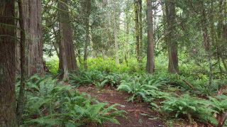 Photo 8: 14.65AC BARRETT STREET in Mission: Mission BC Land for sale : MLS®# R2079511