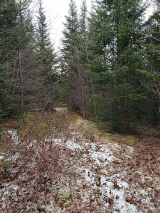 Photo 7: Lots Melrose Country Harbour Road in Country Harbour: 303-Guysborough County Vacant Land for sale (Highland Region)  : MLS®# 202102147