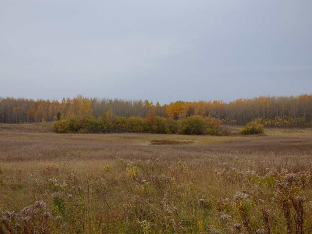 Photo 13: Photos: N1/2 SE19-57-1-W5: Rural Barrhead County Rural Land/Vacant Lot for sale : MLS®# E4217154