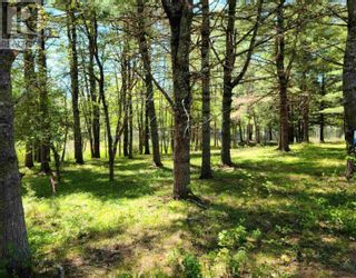 Photo 3: Medway River Road in Bangs Falls: Vacant Land for sale : MLS®# 202122898