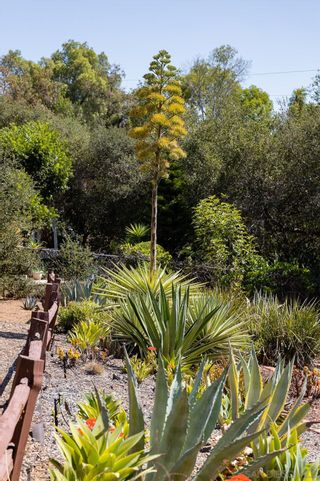 Photo 39: SOUTHEAST ESCONDIDO House for sale : 4 bedrooms : 329 Cypress Crest Ter in Escondido