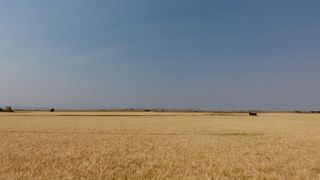 Photo 16: : Rural Foothills M.D. Land for sale : MLS®# C4137604