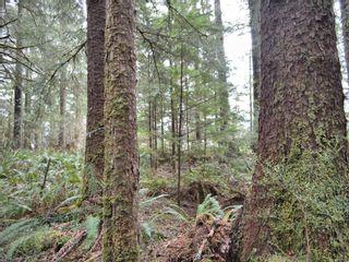 Photo 19: W1/2 SW&NW1/4 Quatsino Sound in : NI Port Hardy Land for sale (North Island)  : MLS®# 866764