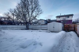 Photo 47: 328 Templeton Circle NE in Calgary: Temple Detached for sale : MLS®# A1074791