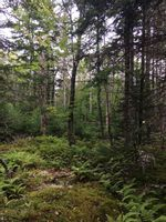 Main Photo: Lot X- 85C Beamish Road in East Uniacke: 105-East Hants/Colchester West Vacant Land for sale (Halifax-Dartmouth)  : MLS®# 202123579