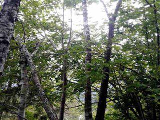 Photo 3: 4160 SLESSE Road in Sardis - Chwk River Valley: Chilliwack River Valley Land for sale (Sardis)  : MLS®# R2516369