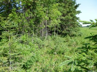 Photo 5: 1 Rural Address in Barrier Valley: Lot/Land for sale (Barrier Valley Rm No. 397)  : MLS®# SK861319