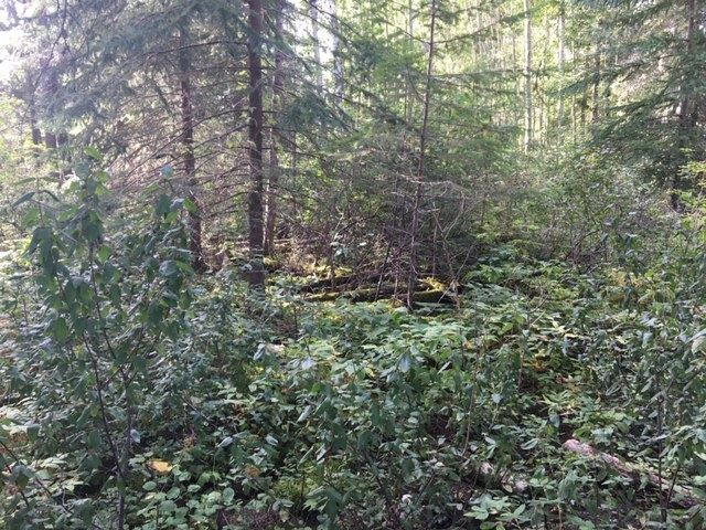 Photo 5: Photos: LOT 4 VALHALLA Road in Quesnel: Quesnel - Town Land for sale (Quesnel (Zone 28))  : MLS®# R2491850
