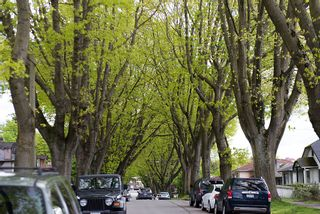 Photo 20: 3504 Turner Street in Vancouver: Home for sale : MLS®# V1064126