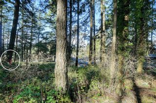 Photo 6: 3324 Lodmell Rd in : La Walfred Land for sale (Langford)  : MLS®# 866871
