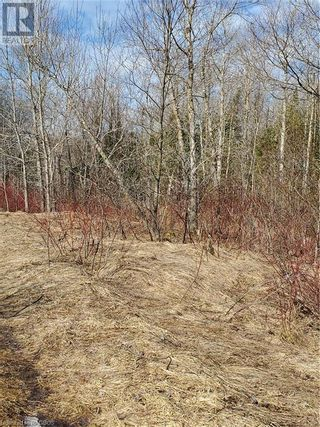 Photo 14: PT LT 21-22 GREY ROAD 14 in Grey Highlands: Vacant Land for sale : MLS®# 40088643