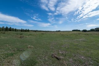 Photo 50: 51071 223: Rural Strathcona County House for sale : MLS®# E4261983