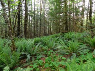 Photo 4: 10630 Tilly Rd in Port Alberni: PA Sproat Lake Land for sale : MLS®# 879576