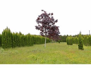 """Photo 17: 7200 216TH Street in Langley: Willoughby Heights Land for sale in """"Milner"""" : MLS®# F1411651"""