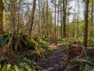 Photo 37: 3699 Burns Rd in COURTENAY: CV Courtenay West House for sale (Comox Valley)  : MLS®# 834832