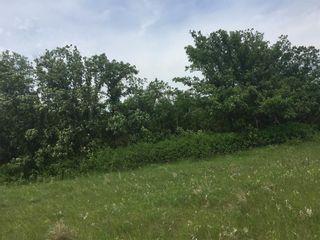 Photo 16: 0 SW-12-03-04-E RAPIDS Road in Dominion City: R17 Farm for sale : MLS®# 202117943