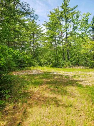 Photo 12: Lot 101 Dorey Mills Road in Clearland: 405-Lunenburg County Vacant Land for sale (South Shore)  : MLS®# 202119645