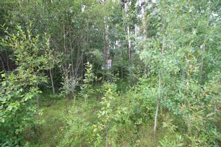 Photo 3: 65 15065 TWP RD 470: Rural Wetaskiwin County Rural Land/Vacant Lot for sale : MLS®# E4257316