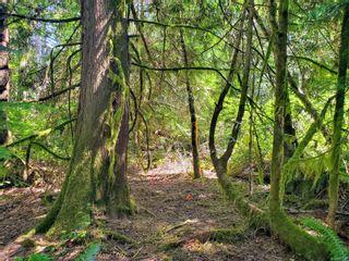 Photo 7: 6929 Sellars Dr in Sooke: Sk Broomhill Land for sale : MLS®# 881597