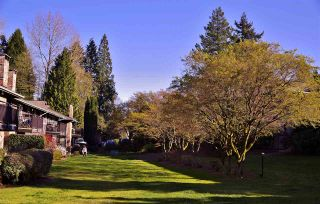 "Photo 2: 206 555 W 28TH Street in North Vancouver: Upper Lonsdale Condo for sale in ""Cedar Brooke Village Gardens"" : MLS®# R2555478"