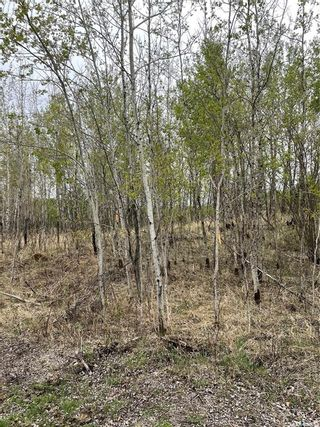 Photo 3: E Second Street South in Endeavour: Lot/Land for sale : MLS®# SK856274