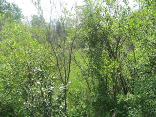 Photo 7: 398 52152 RR 210: Rural Strathcona County Rural Land/Vacant Lot for sale : MLS®# E4254227