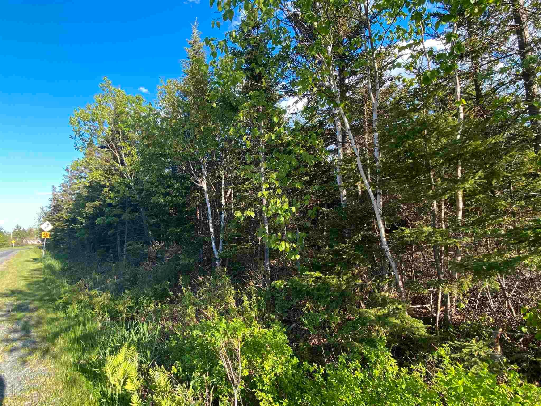 Main Photo: 16 acres Caribou Island Road in Caribou Island: 108-Rural Pictou County Vacant Land for sale (Northern Region)  : MLS®# 202104068