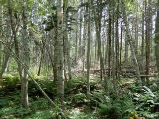 Photo 6: Pictou Landing Road in Pictou Landing: 108-Rural Pictou County Vacant Land for sale (Northern Region)  : MLS®# 202118660
