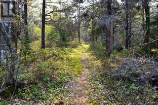 Photo 16: Old Kettle Road in Port Medway: Vacant Land for sale : MLS®# 202113253