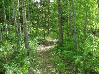 Photo 8: 41 Heron Point Cl: Rural Wetaskiwin County Rural Land/Vacant Lot for sale : MLS®# E4233949