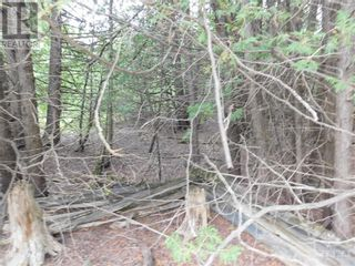 Photo 5: ROCKSPRINGS ROAD in North Augusta: Vacant Land for sale : MLS®# 1262472