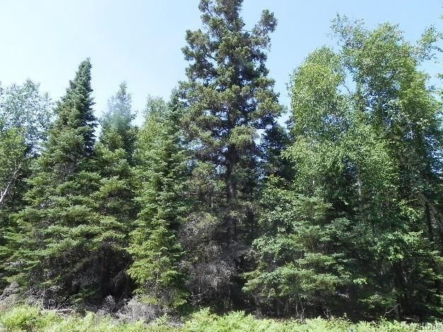 Beautiful double lot.  Gorgeous pines.  Lot is high and dry.