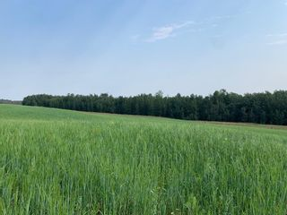 Photo 1: Hwy 616 RR 10: Rural Wetaskiwin County Rural Land/Vacant Lot for sale : MLS®# E4258071