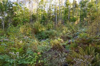 Photo 15: Lot 148 3619 Forties Road in Franey Corner: 405-Lunenburg County Residential for sale (South Shore)  : MLS®# 202125303