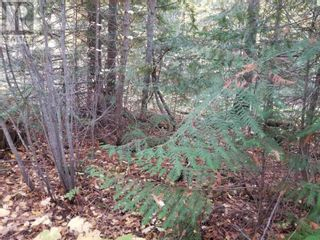 Photo 7: LOT 42 HOOVER BAY ROAD in Canim Lake: Vacant Land for sale : MLS®# R2623760