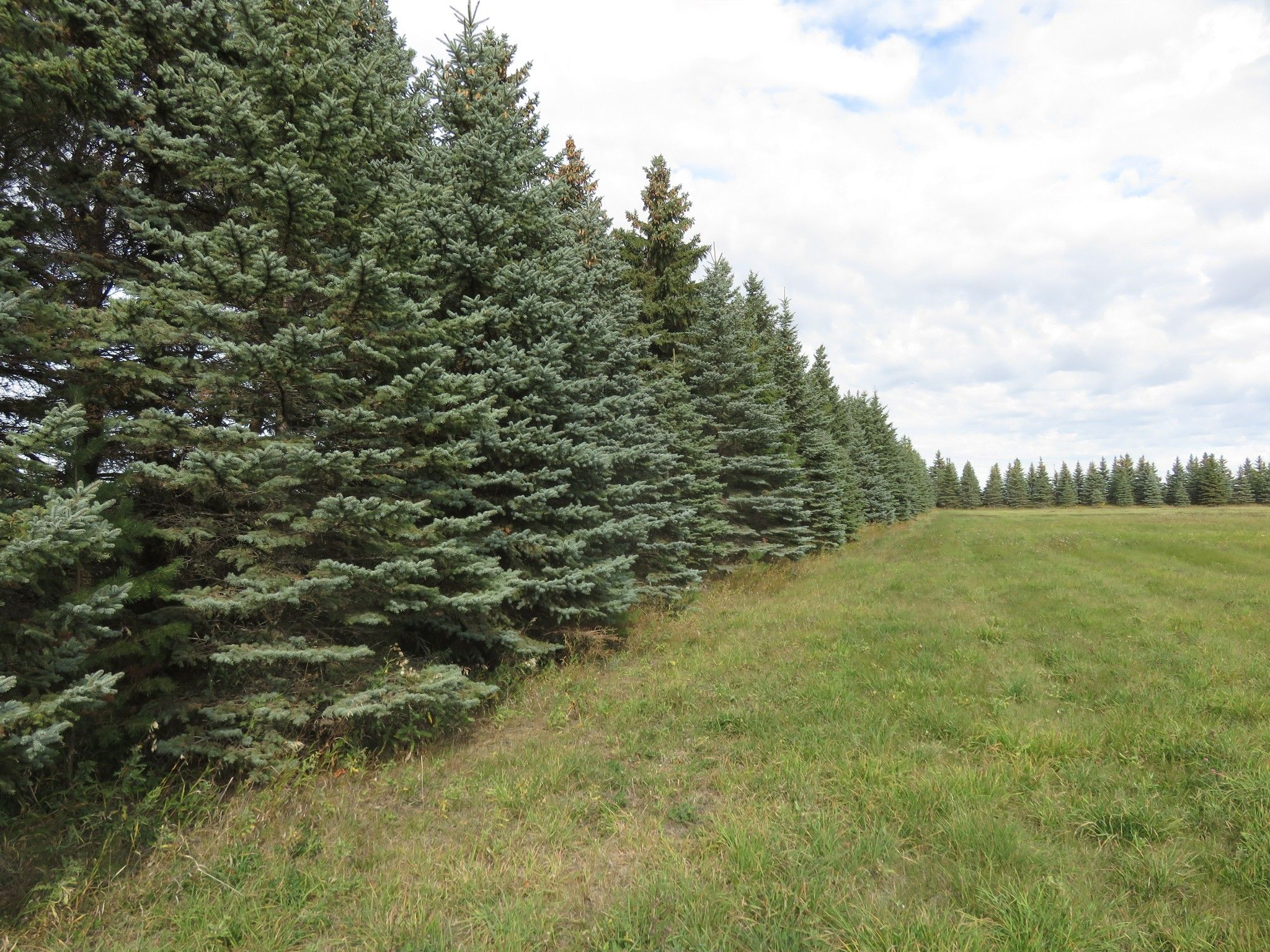 Main Photo: 0 Centreline Road: RM Springfield Vacant Land for sale (R04)  : MLS®# 202103923