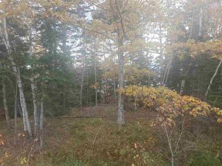 Photo 9: 2520 Eskasoni Road in Northside East Bay: 207-C. B. County Vacant Land for sale (Cape Breton)  : MLS®# 202023733