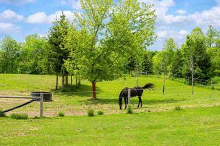 Photo 37: 796260 E 3rd Line in Mulmur: Rural Mulmur House (Bungalow) for sale : MLS®# X5265550