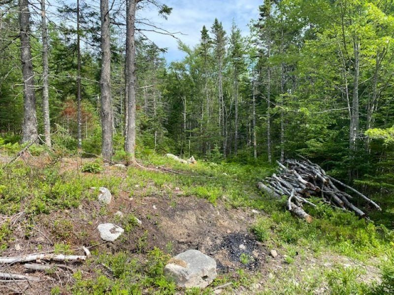 Main Photo: HL-XAC 245 Old Halifax Road in Glen Haven: 40-Timberlea, Prospect, St. Margaret`S Bay Vacant Land for sale (Halifax-Dartmouth)  : MLS®# 202118186
