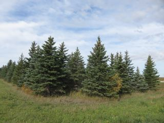 Photo 9: 0 Centreline Road: RM Springfield Vacant Land for sale (R04)  : MLS®# 202103923