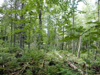 Photo 3: 299 New Lairg Road in New Lairg: 108-Rural Pictou County Vacant Land for sale (Northern Region)  : MLS®# 202117815